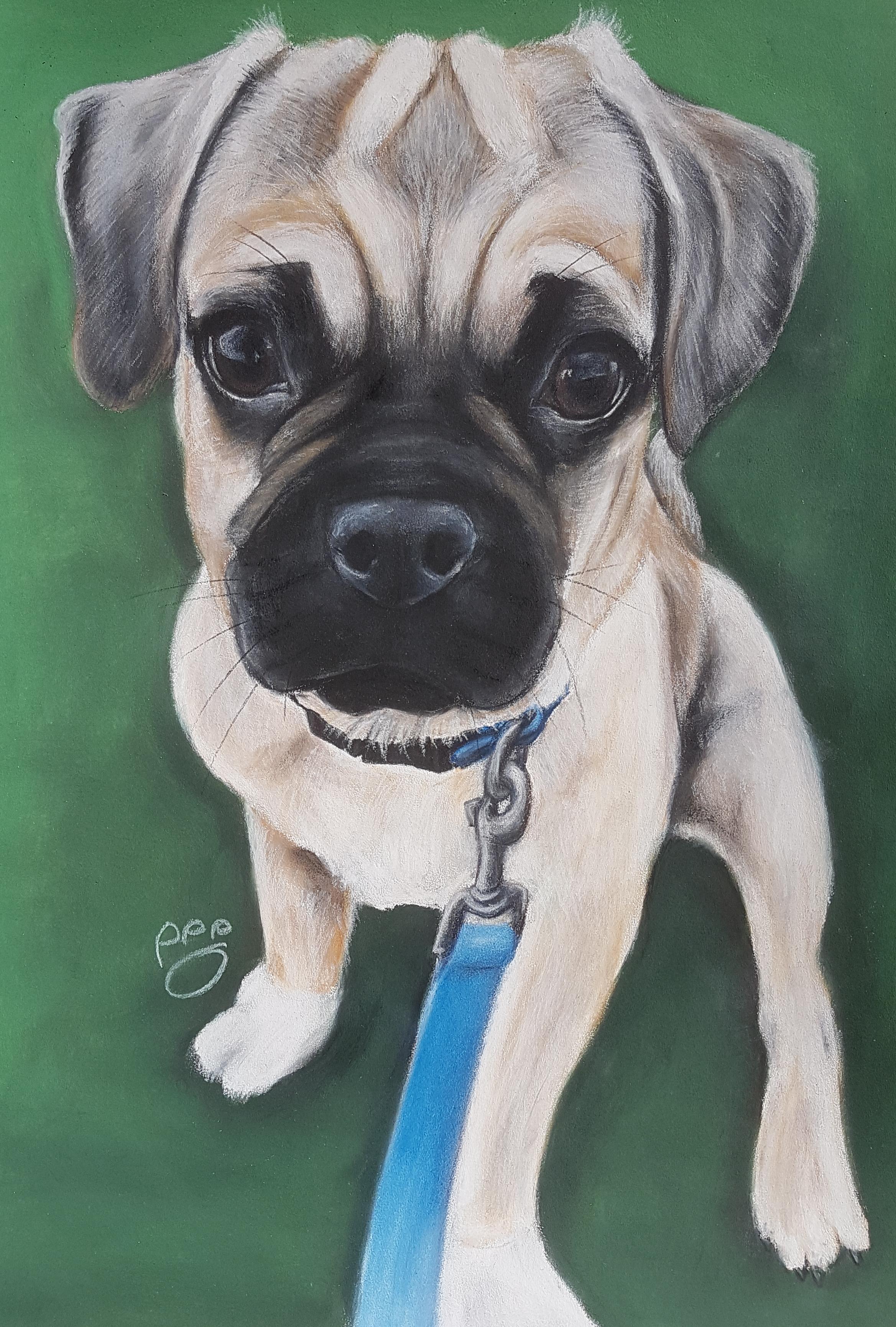 Rocky A3 Pug