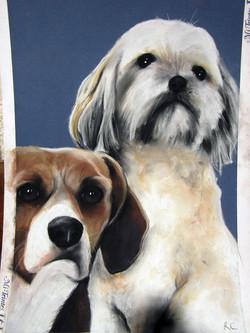 Beagle and Malteze Terrier