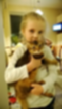 котенок сомали Алиса