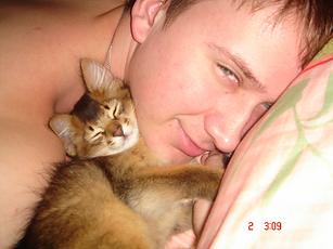 котенок сомали Атилла