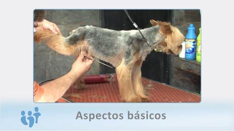 2015 - Curso peluquería canina - Ised