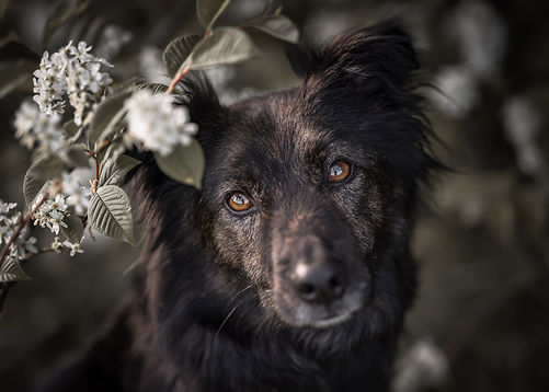 hundefotografie-allgäu-klicktastic-photography.jpg