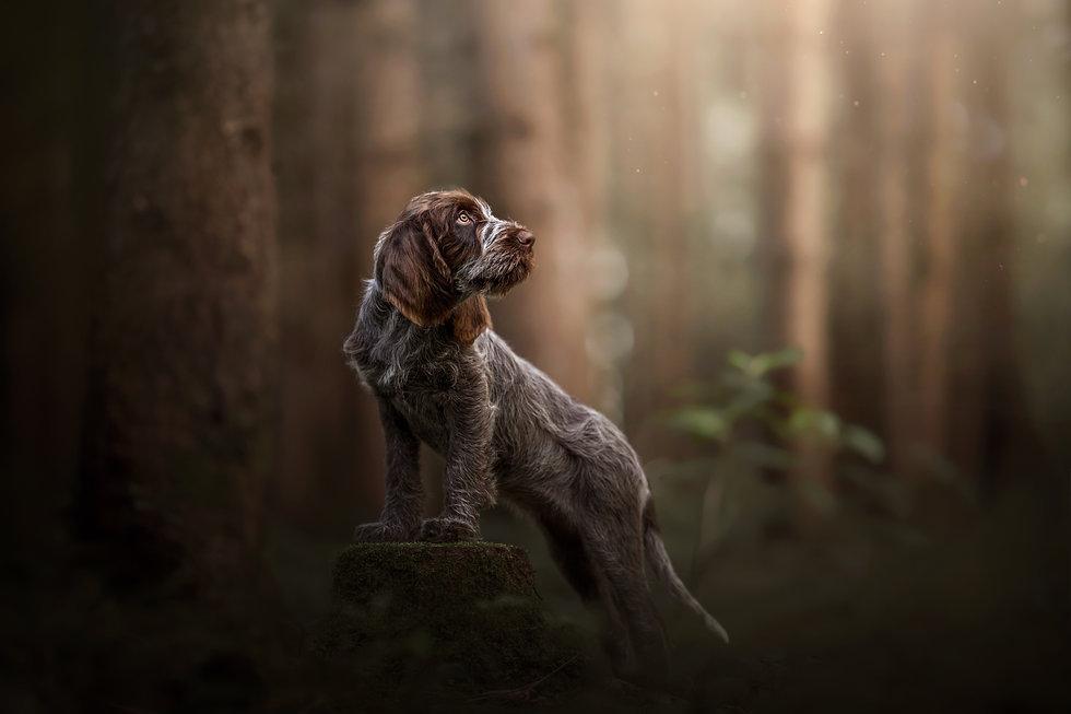 hundefotografie-im-kißlegg-esther-rybczynski-klicktastic-photography.jpg