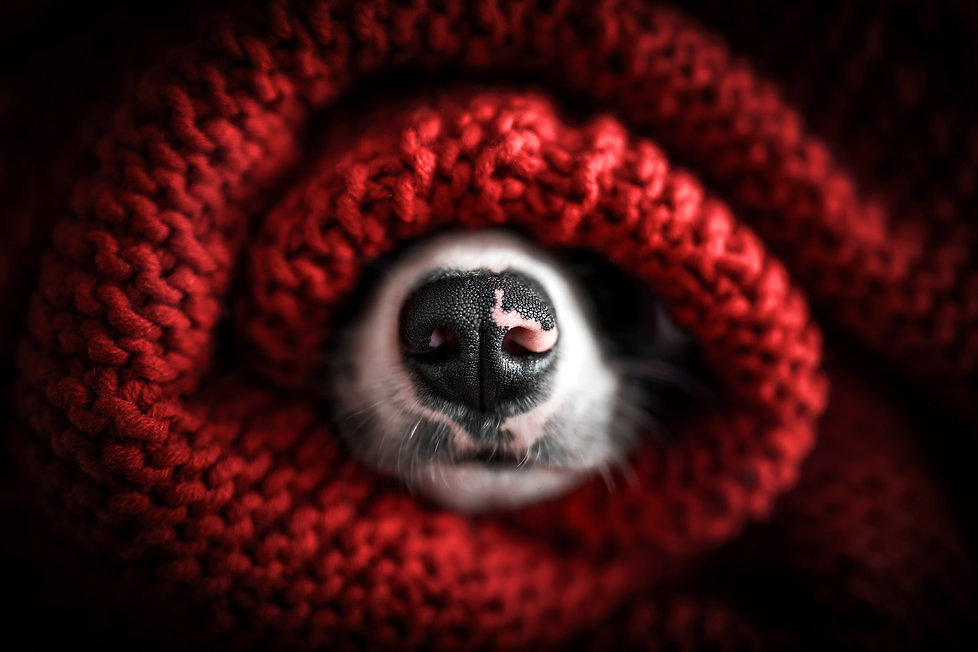 hundefotografie-kißlegg-klicktastic-photography.jpg