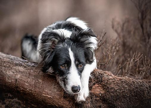 hundefotografie-bodensee-klicktastic-photography.jpg