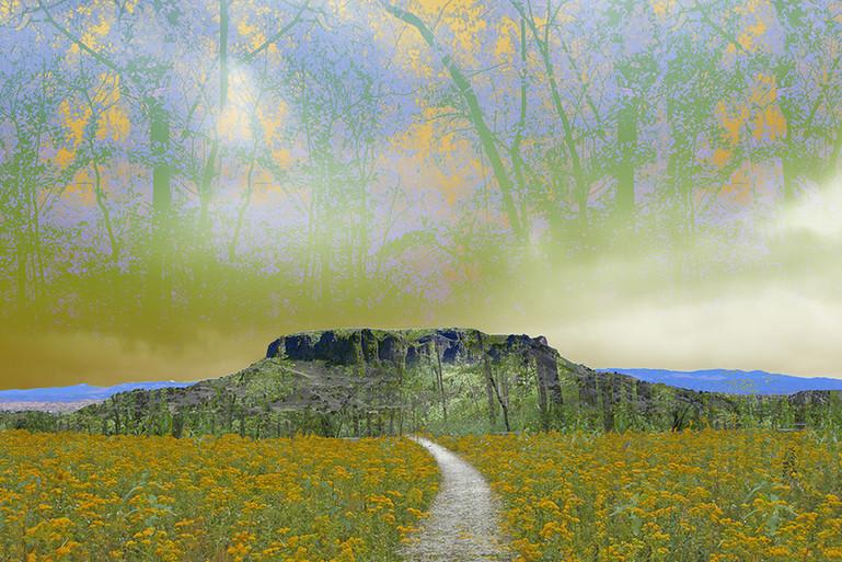 Through the Flowers to Black Mesa