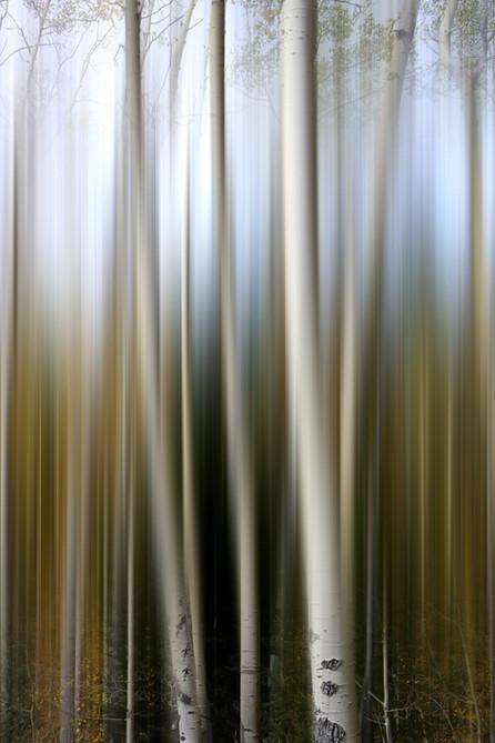 Diverging Birch.jpg