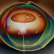 Celestial Nucleus