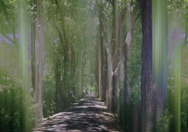 Bosque Spirits