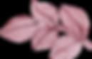 Leaf, Wild Heritage, Logo Placeholder,