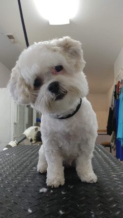 Small Dog Head Tilted