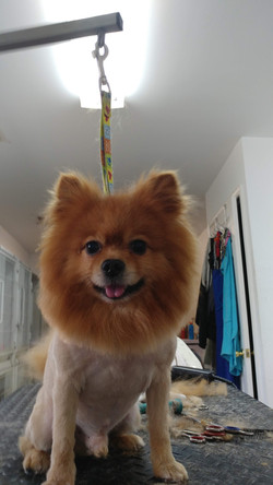 Small happy dog