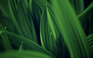 Leaves-of-Green.jpg