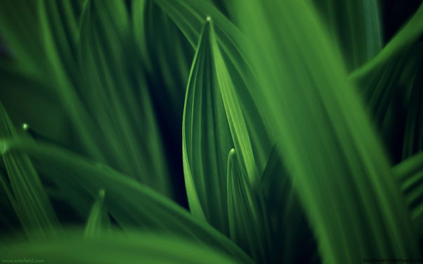 Leaves-of-Green.jpg