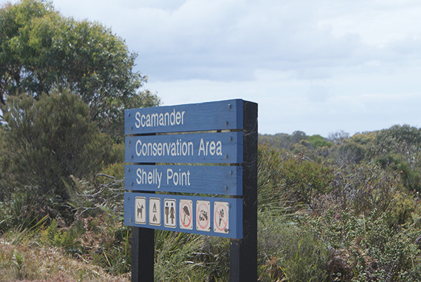 Shelley Point Camping