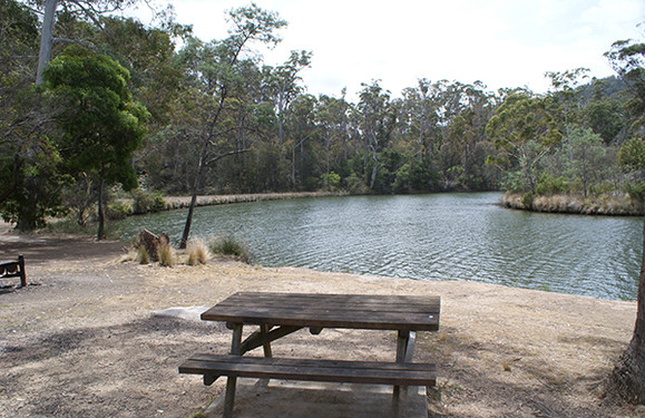 Scamander Forest Camping
