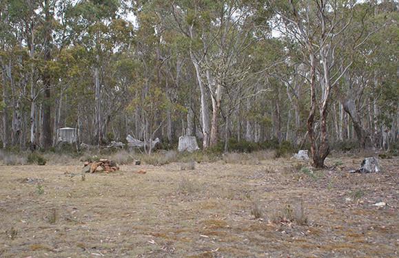 Dago Point Camping