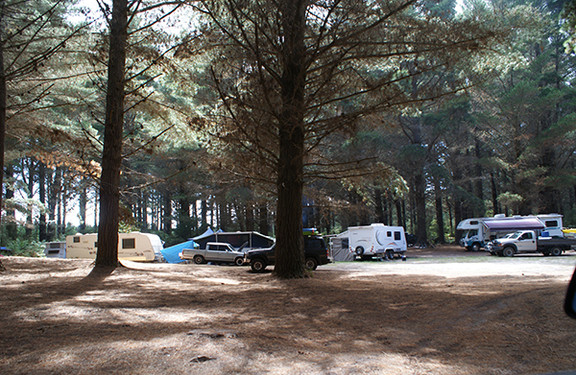 Macquarie Forest Camping