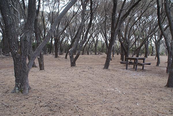 Stumpys Bay 2 Camping