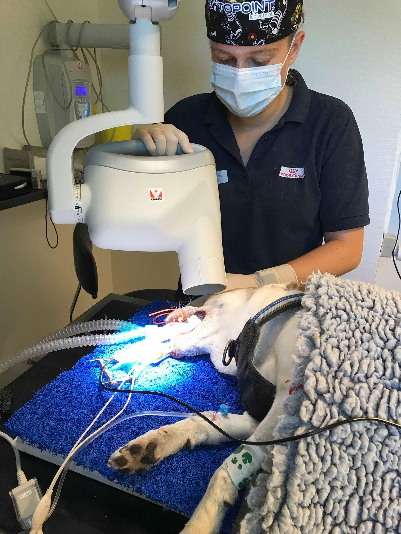 Tand-røntgen