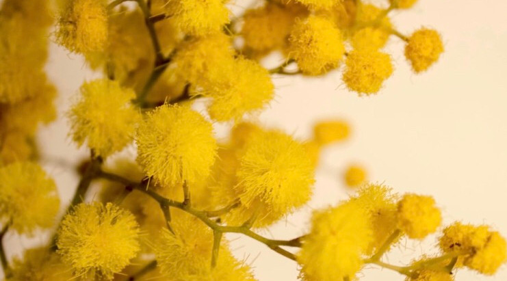 Mimosa themed workout next Monday 8 March 2021