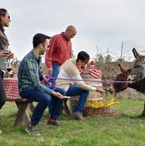 Mini Donkey Winery Tours