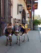 designated donkeys.jpg