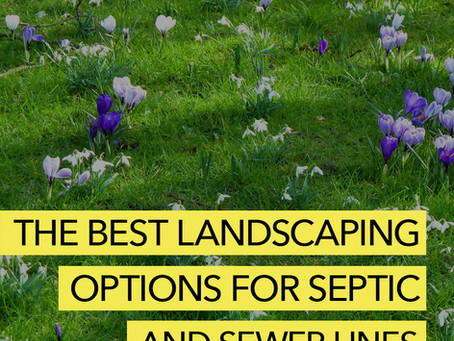 Your Best Landscaping Options for Septic Drainfields and Sewer Lines.