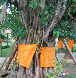 Ordaining Trees to Prevent Logging