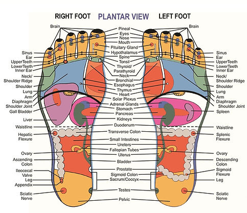 New - reflexology-chart-01.jpeg