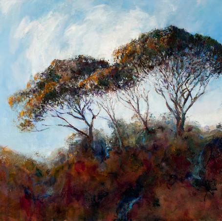 trees in Monterosso al Mare