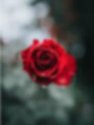 Screen Shot 2019-01-31 at 5.49.18 PM.png
