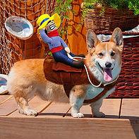Funny Halloween Riding Horse Cowboy Pet