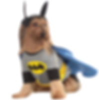 Batman Pet Costume.jpg