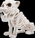 Skeleton%20Plastic%20Dog%20Bones_edited.