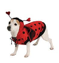 Pet Ladybug Costume.jpg