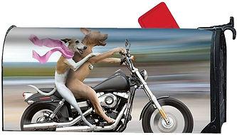Dog Motorcycle.jpg