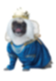 QUEEN OF BONES DOG COSTUME.jpg