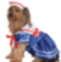 Sailor Girl Pet Costume.jpg