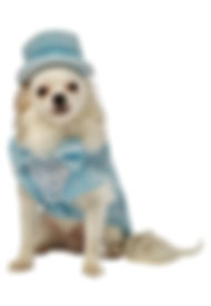 Dumb and Dumber Harry Pet Costume.jpg
