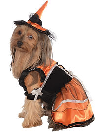 Witch Pet Costume.jpg