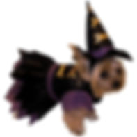 Witch Dog Costume Pet Halloween Fancy Dr