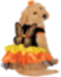Butterfly Pet Costume.jpg
