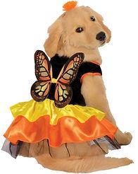 Butterfly Pet Costume.jpg