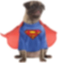 Superman Pet Costume.jpg