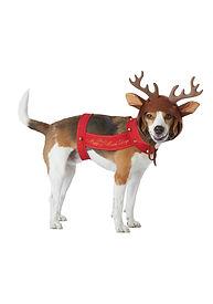 DOG REINDEER COSTUME.jpg