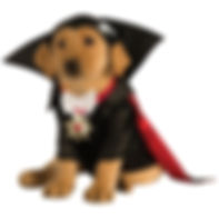 Dracula Dog Costume Pet Halloween Fancy