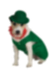 LEPRECHAUN PET COSTUME.jpg