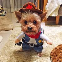 Blue Dog Costume Clothes Cute Cowboy Cos