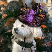 Pet Dog Cat Funny Sipder Witch Costume.j